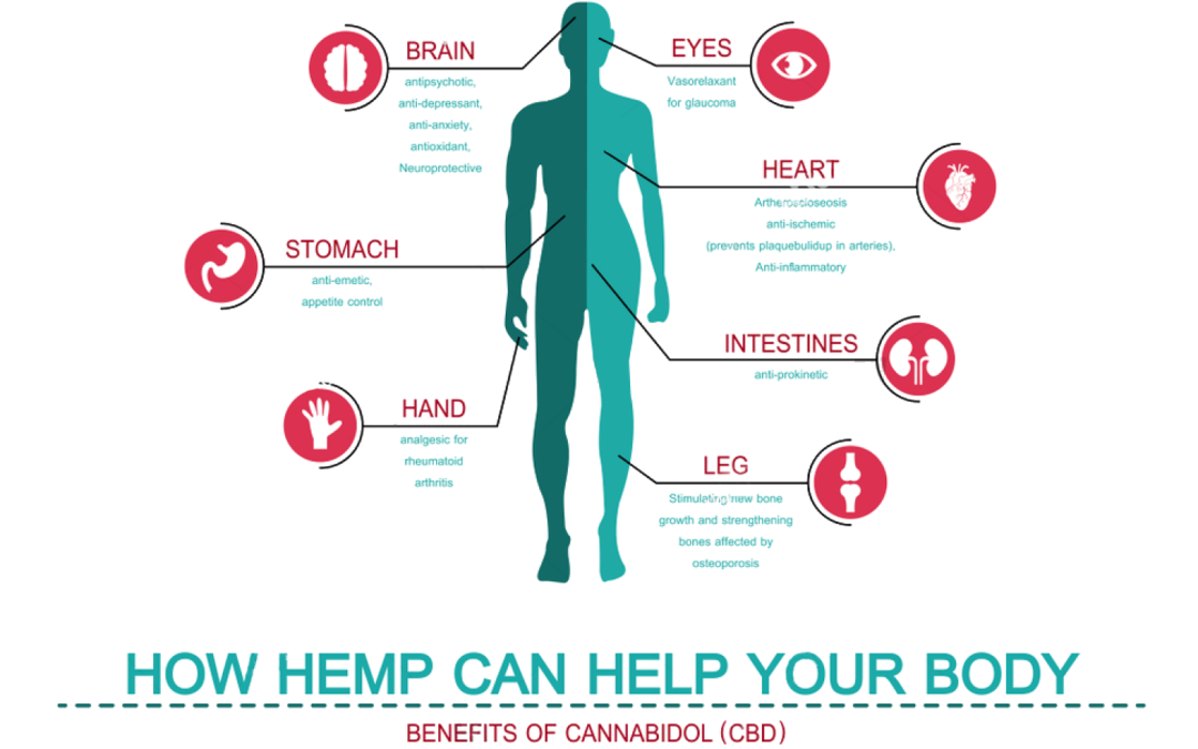 What Will CBD Do To Your Body